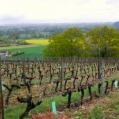 Weekend oenotouristique à Jasnières et Coteaux du Loir
