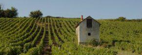 Jasnières et Coteaux du Loir