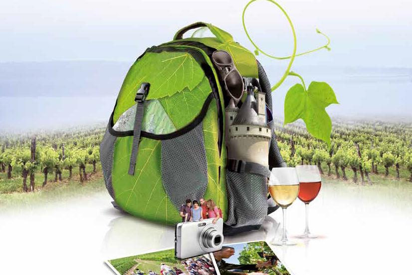 Vignes vins et Rando en Touraine