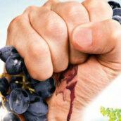 In vino veritas rencontre avec Jonathan Nossiter