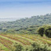 Route des vins en Alentejo au Portugal