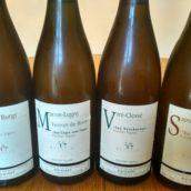Degustations vins du Maconnais et Jura