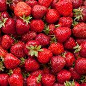 Accord mets/vins : Que boire avec… des fraises ?